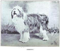 1890 Old English Sheepdog