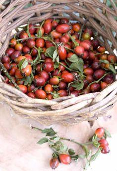 080814 rose hips ~ a basket of rosehips - rosehip syrup recipe Herbal Remedies, Natural Remedies, Rosehip Syrup, Medicinal Herbs, Herbal Medicine, Natural Health, Herbalism, Clean Eating, Healthy Eating