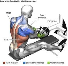 LATS - SEATED CABLE ROWS