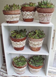 ᐅᐅ decoration with wine boxes and fruit ᐅᐅ Deko mit Weinkisten & Obstkisten Wine boxes decorative garden 66 - Succulents In Containers, Container Plants, Succulents Garden, Garden Pots, Container Gardening, Planting Flowers, Succulent Pots, Pot Jardin, Deco Floral