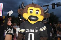 Pearl Street Stampede (Boulder) -  Sat, October 19, 7:00pm -   Parade and pep rally. Join the Golden Buffalo Marching Band, CU Football Team and cheerleaders before the home game  and meet your favorite CU Buffs. The stampede is led by an antique CU fire truck and ends with a pep rally in the Daily Camera parking lot (11th and Pearl) in historic downtown Boulder. | Free and fun for the whole family. |  Visit http://Colorado-for-Free.com for more free stuff in Colorado
