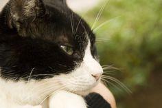 ネコの無料写真