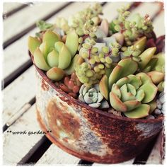 <3nothing more beautiful than succulents in rusty cans