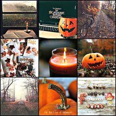 Pumpkins and fall ❤️
