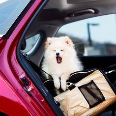 아슬란을 타고 반려견과 함께 한 피크닉  Going on a picnic with my lovely dog on Aslan