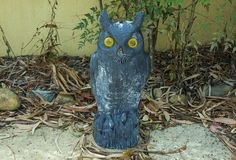Mr owl, the watcher of the garden.