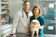 Benefícios da Castração / Esterilização do seu Cão   Petzlife Brasil