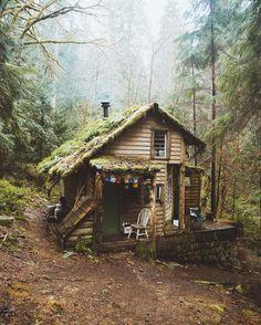 Cabin hidden away in woods of Washington state.