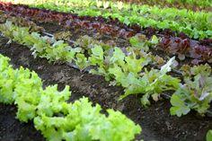 When to plant your garden (By @HomeSavvyAtoZ.com)