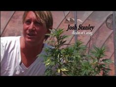 This is what Medial Marijuana is all about! These people grow a plant they named Charlotte's Web with just the right balance of natural chemicals to treat epilepsy successfully, naturally.
