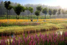 turenscape sanlihe river ecological corridor 08