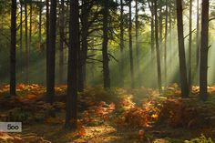 Woodland light by Simon Marlow on 500px