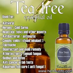 Tea Tree essential oil uses Making Essential Oils, Tea Tree Essential Oil, Essential Oil Perfume, Essential Oil Uses, Doterra Essential Oils, Essential Oil Diffuser, Tea Tree Oil Uses, Tea Tree Oil For Acne, Healing Oils