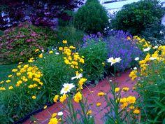 front walkway summer flowers