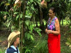 Dona Francisca fala sobre o algodão roxo, mangarataia e outras plantas m...