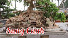 Cây Sung cảnh bonsai cực chất triển lãm SVC Bắc Ninh Garden Sculpture, Lion Sculpture, Bonsai Art, Outdoor Decor, Youtube, Youtubers, Youtube Movies