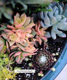 Creating a Mini Succulent Planter Oasis - Home - Creature Comforts - daily inspiration, style, diy projects + freebies