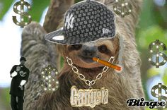 Sloth How About No Animals Giff #5931 - Funny Sloth Giffs  Funny Giffs  Sloth Giffs