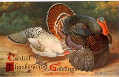 Cordial Thanksgiving Greetings