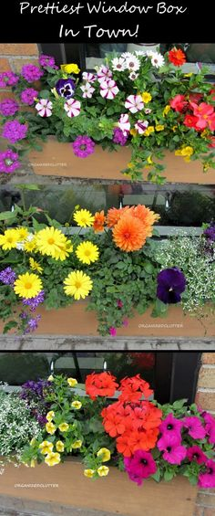 Prettiest Window Box in Town!  A show stopping window box in a riot of annual color!