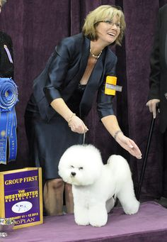 "Congratulations to professional handler Lisa Bettis and GCH Vogelflight's 'Honor' To Pillowtalk for their Best in Group win at the 2014 Westminster Dog Show. We're proud to say that ""Honor,"" a Bichon Frise, is fed Purina Pro Plan."