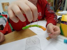 Save FRED the worm! Great STEM activity! from Smart Chick Teaching Resources Link is at the bottom in the comments
