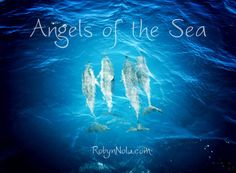Dolphins are the angels of the sea ♥