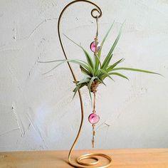 tillandsia ⚓ fille de l ' air ⚓ décoration aluminium doré et sa tillandsia : Accessoires de maison par lartisane-plantes