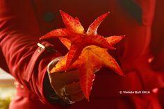 Foglie d'autunno di colore rosso ...