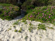 Spring flowers in Tuscany in the Parco Costiero Della Sterpaia, Maremma: Torre Mozza beach