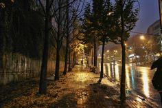 https://flic.kr/p/GFhdPh | 비에 젖은 낙엽들 : Of fallen leaves wet with rain | 가을이 끝났다는 것을 확실하게 느끼게 해줍니다. 이런 모습을 보면요.