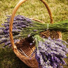 How to Make Lavender Body Oil  Dried lavender flowers can be used in a variety of ways. One of my favorites to-dos -- a lavender body oil -- is perfect for soothing sore muscles and irritated skin and provides a scent that will relax both mind and body. Below, I share a simple recipe to make your own.