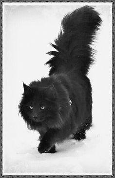 Eautiful Black Cat