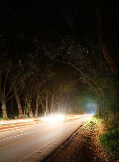 maluhia road eucalyptus tree tunnel...to poipu beach, kauai