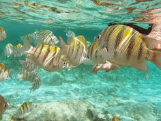 Snorkeling in Coco Cay, Bahamas.  I've done that!  So beautiful and tranquil when underwater with the fish - truly heavenly :-)