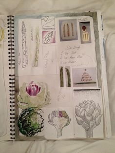 "amygration - ""asparagus & artichoke"" sketchbook"