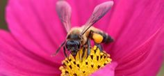 Why Burt's Bees Is Committing to This Crazy Social Marketing Plan. The lip balm giant's plan to drop the letter B from their products and plant a billion flowers is working.
