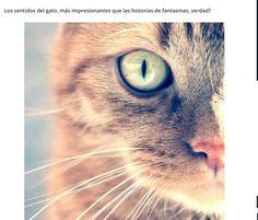 Los sentidos del gato..
