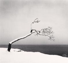 1stdibs | Michael Kenna - KUSSHARO LAKE TREE, STUDY NO 3, KOTAN, HOKKAIDO, JAPAN, 2005