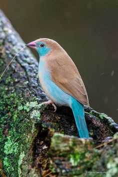 Blue Mondays - Birds-Our feathered friends