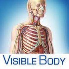 153 Best Anatomia Humana Images On Pinterest