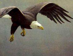 """Robert Bateman, """"Approach - Bald Eagle"""""""