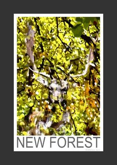 Fallow Deer Stag in the New Forest (Art Print)