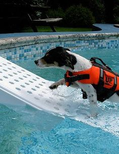Attach the durable Swimming Pool Pet Ramp to your pool decking for safe and  simple pool access for your best friend.