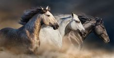 Horse Herd Run - Download From Over 50 Million High Quality Stock Photos, Images, Vectors. Sign up for FREE today. Image: 68829140