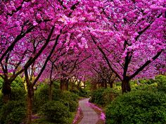 I am very picky about trees. Trees are messy. If I am going to have a tree it either has to be HUGE like South of Grand trees or it has to flower in the spring. If I'm am going to be picking up its waste 3 times a year its gotta give me something!