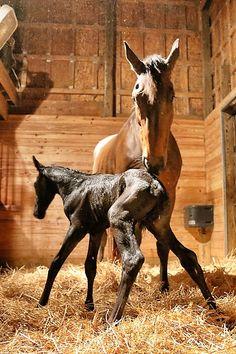 Newborn horse standing - photo#18