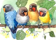 Items similar to ACEO Limited Edition -Our happy hours, Small gift idea, Bird lover, Art print of an ACEO original watercolor painting, Love birds on Etsy – Parrot Watercolor Bird, Watercolor Animals, Watercolor Paintings, Watercolours, Art Aquarelle, Art Et Illustration, Illustrations, Bird Art, Beautiful Birds