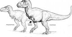 Science Answers An Age-Old Question: How Can You Spot A Pregnant T. Rex?