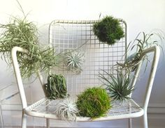 Air Chair! Air Plants drying on a vintage lawn chair Tillandsia chair by Zenaida Sengo